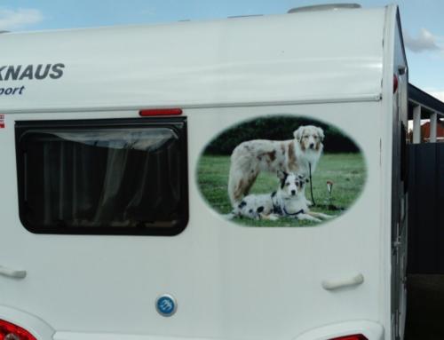 Tierfoto Aufkleber: für Wohnmobile, Wohnwagen oder Anhänger