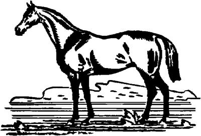 - Motiv Nr.:Pferd_0028
