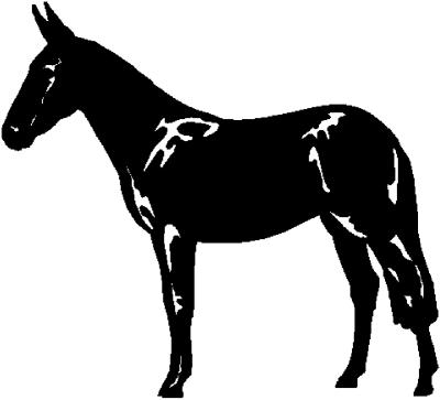 - Motiv Nr.:Pferd_0706