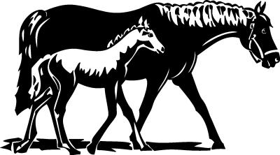 - Motiv Nr.:Pferd_1001