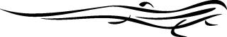 salamander_35